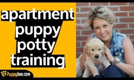 Potty Training Your Puppy When You Live In An Apartment