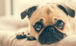 Puppy Pad Training 101: Pros and Cons of Puppy Pad Training